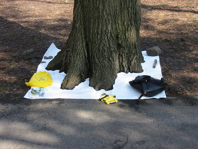 A square of white Tyvek fabric at the base of a large red oak tree. My backpack, surveyor's measuring tape and other tools on the Tyvek and the footprint of the tree has been cut out.